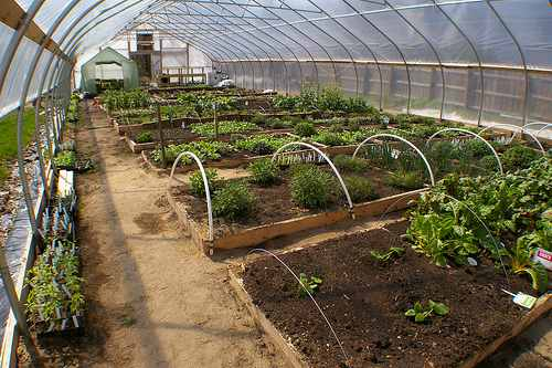 Hoophouses are an inexpensive way to grow produce during the winter.