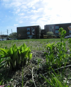 First-year plants in the CHS rain garden