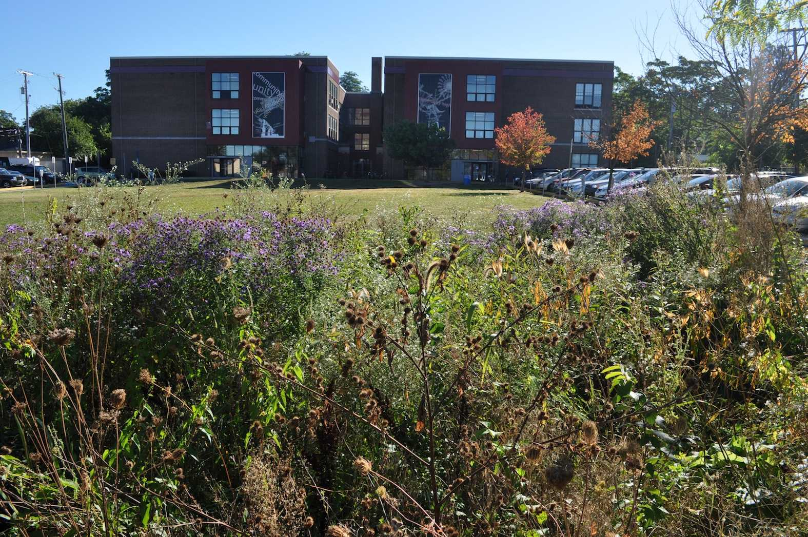 This rain garden in the back lawn was designed by the CHS Ecology Club.