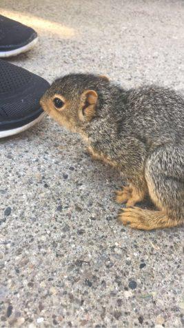 Community High School students find baby squirrel