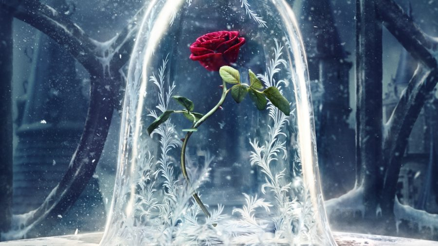 Although beautiful, this isnt your ordinary garden flower: this cursed rose is incredibly important in the film.