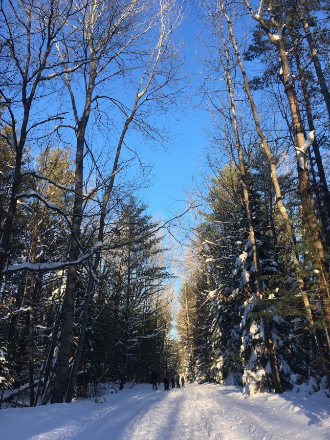 The trees and snow glow in the light of the setting sun as the ecology club hikes out of the woods on Hogsback Road.