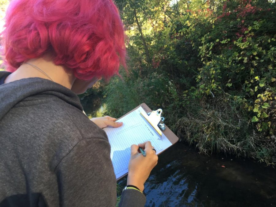 Each group was tasked with drawing a detailed sketch of their section of the river.