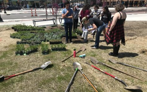 Back Lawn beautification: Ecology Club's new garden