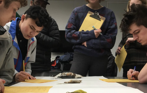 Ecology Class Visits UM Natural History Museum's Bird Collection