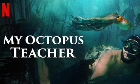 """My Octopus Teacher"" Movie Review"